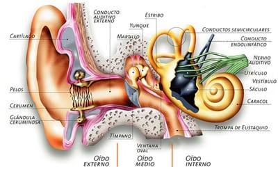 Oido sistema vestibular y Fosfenismo