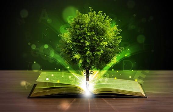 Pedagogía de luz: fosfenos