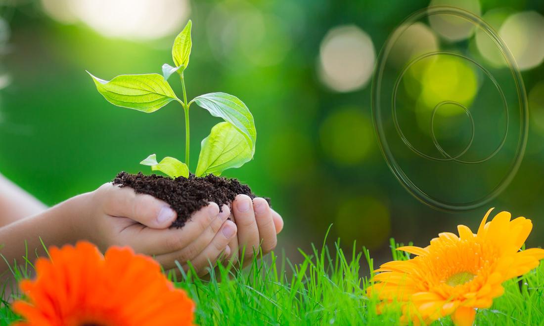 Aceites esenciales y fosfenos, la luz interior y el alma de la planta